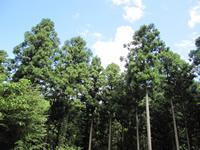 高知県産木材を使用し、木材一本一本トレーサビリティーが徹底されています!